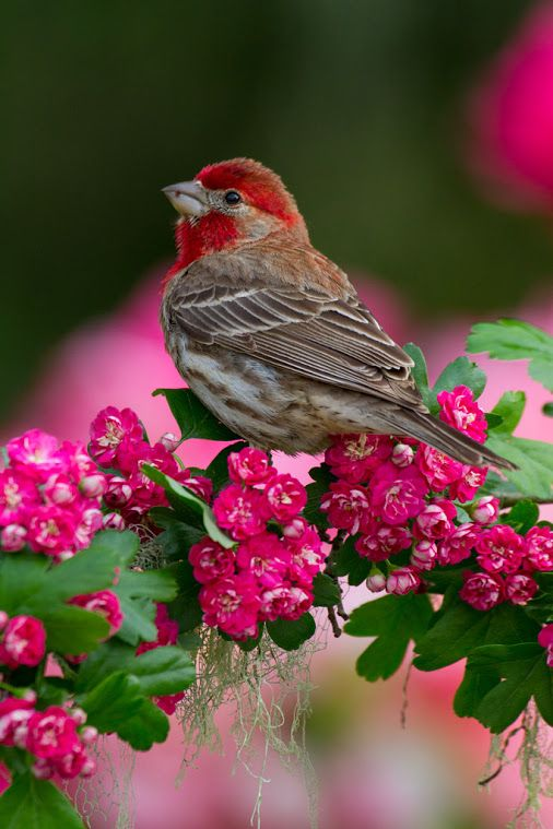 Google Beautiful Birds Finches Bird Backyard Birds Sanctuary
