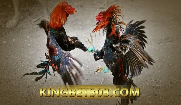 Situs Sabung Ayam S128 Paling Aman Di Indonesia | Ayam ...