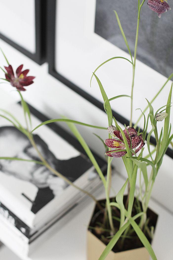Kievitsei-plantje in de Brass Hexagonpot voor een instant voorjaarsgevoel! Hexagon Pot #fermliving