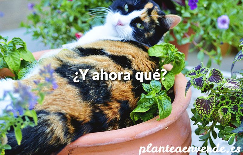 M s de 25 ideas incre bles sobre ahuyentar gatos en for Alejar gatos del jardin