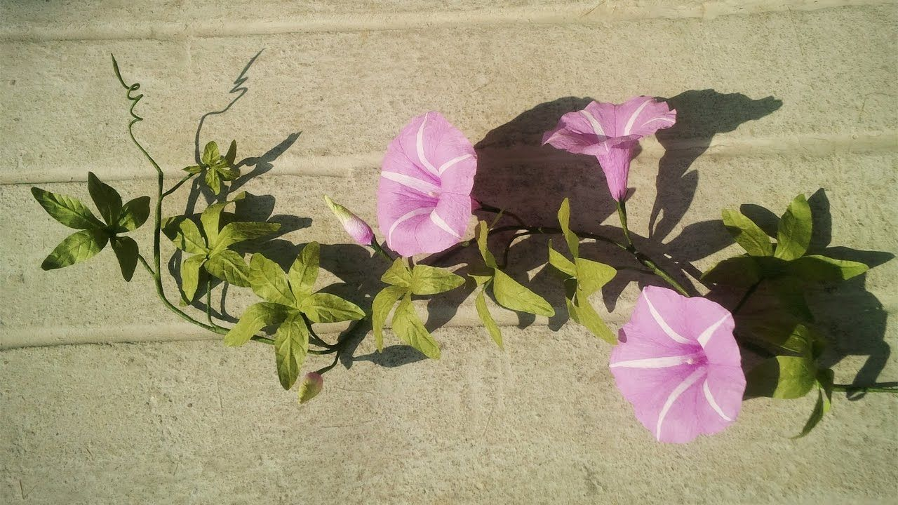 Abc Tv How To Make Cairo Morning Glory Paper Flowers From Crepe