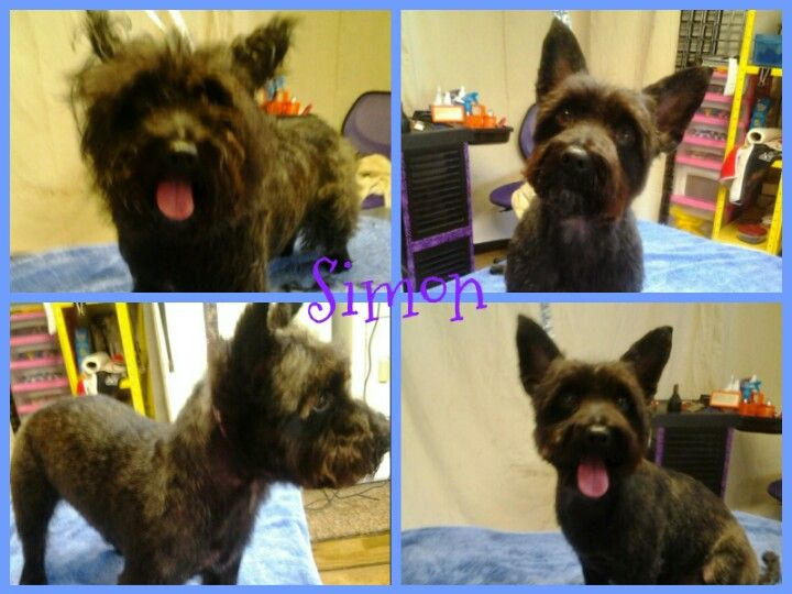Terrier Mix Before And After Unleashed All Breed Dog Grooming