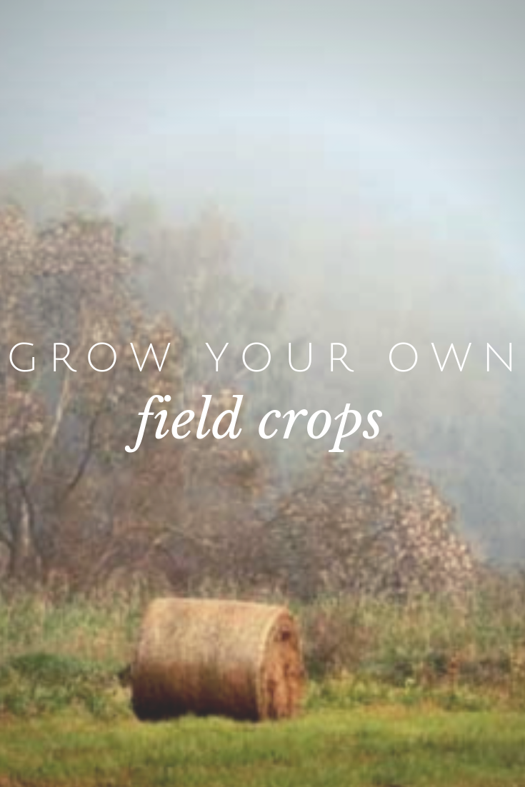 Explore Various Field And Forage Crops For Feeding Your