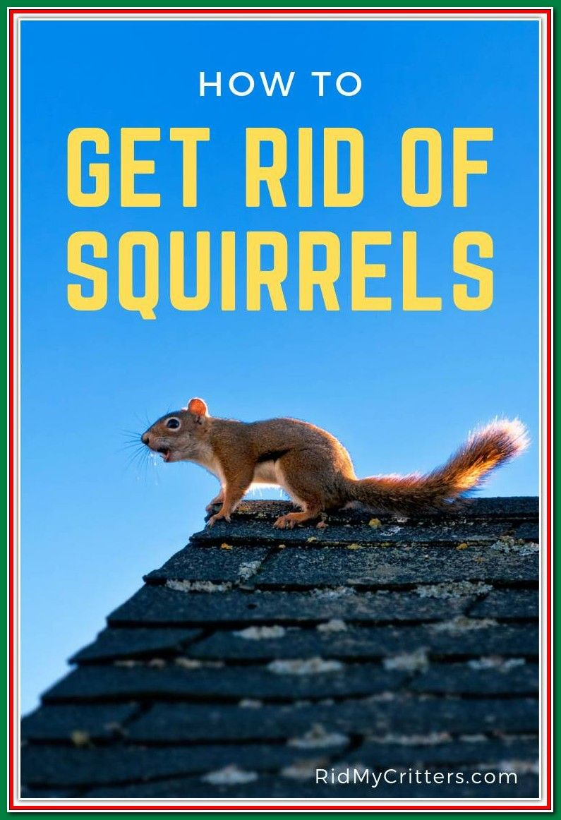 Pin on Get Rid Of Squirrels In Garden