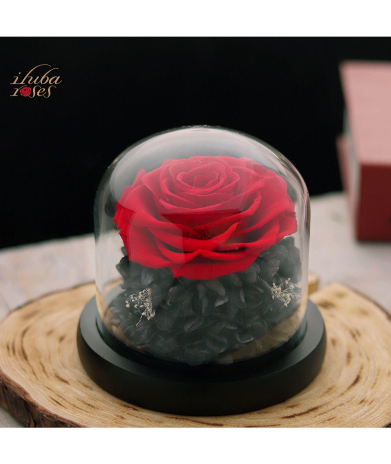 وردة ايلوبا روزز احمر طبيعية دائمة داخل فازة زجاجية Desserts Food Cake