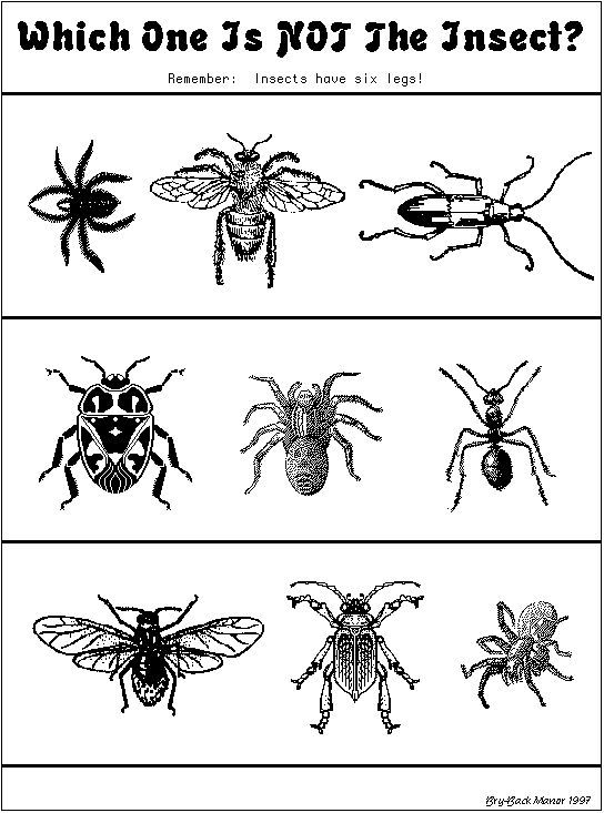 Which one is not an insect\