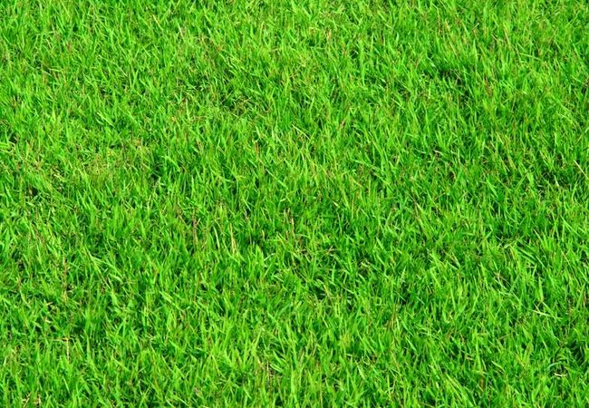 Homemade Fertilizer Makes The Grass Always Greener Lawn