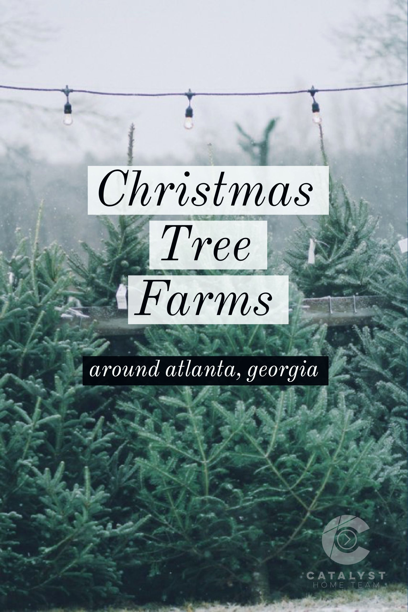 Christmas Tree Farms To Visit Around Atlanta Georgia Catalyst Home Team Christmas Tree Farm Tree Farms Farm Holidays