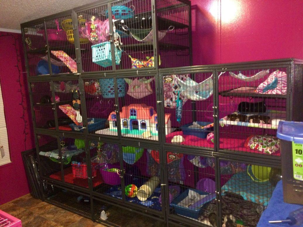 diy rat cage accessories