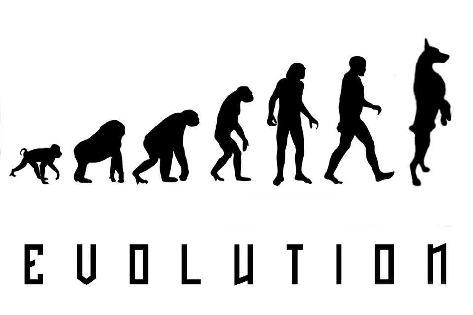 Doberman evolution
