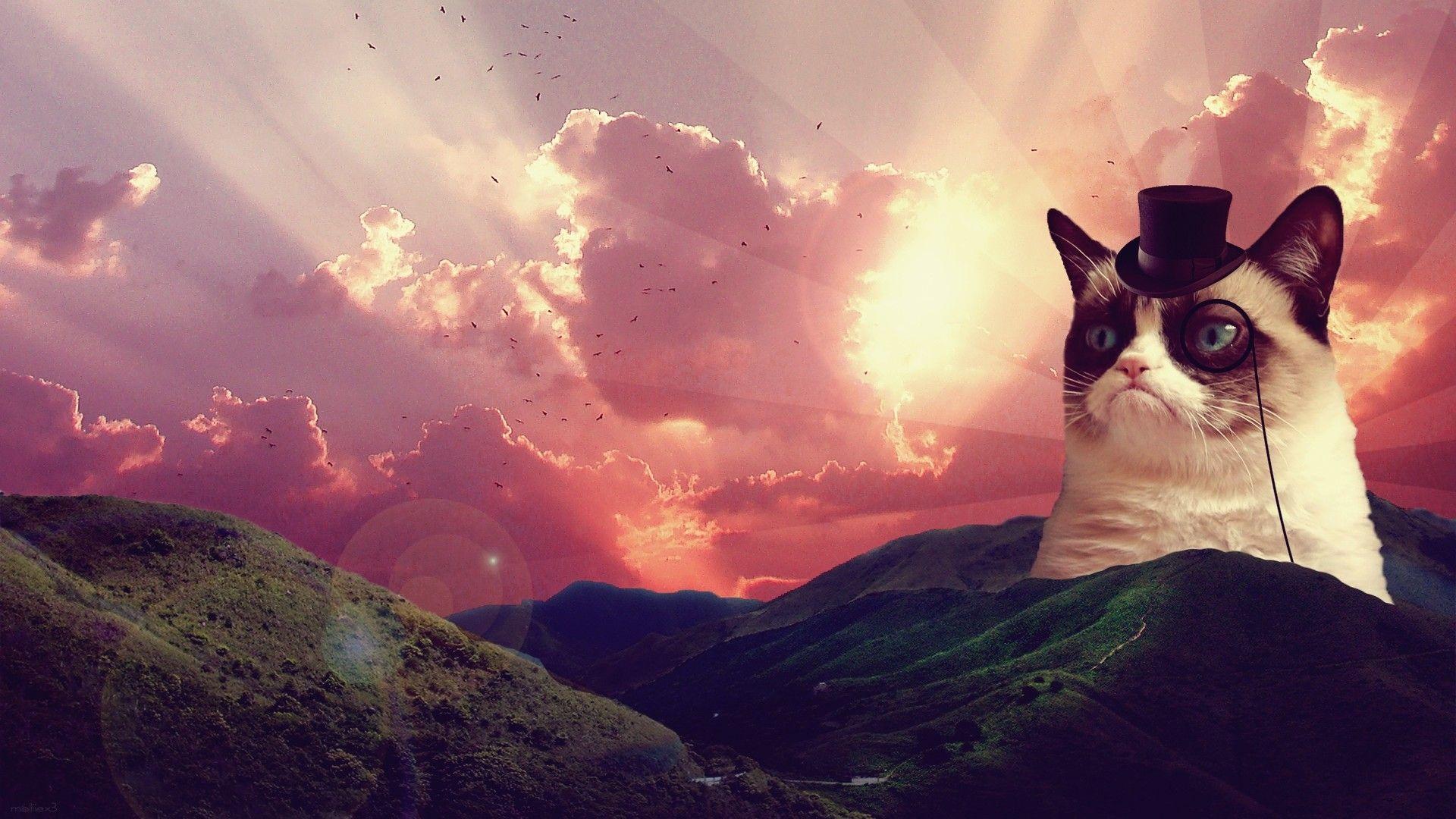 Res 1920x1080 Space Laser Cat Photo Wallpapers Cat Wallpaper Space Cat Grumpy Cat