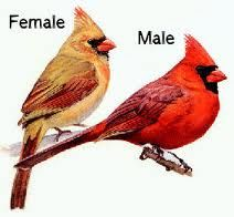 Male And Female Cardinal Drawing Birds Birds Painting Bird Canvas