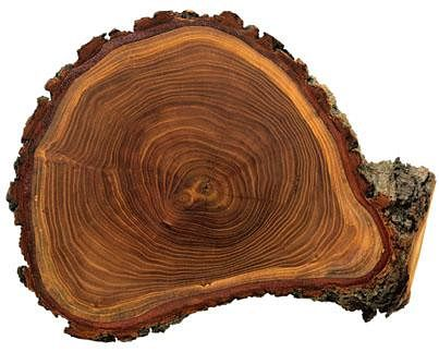 Tree Ring Dating Is Possible Because
