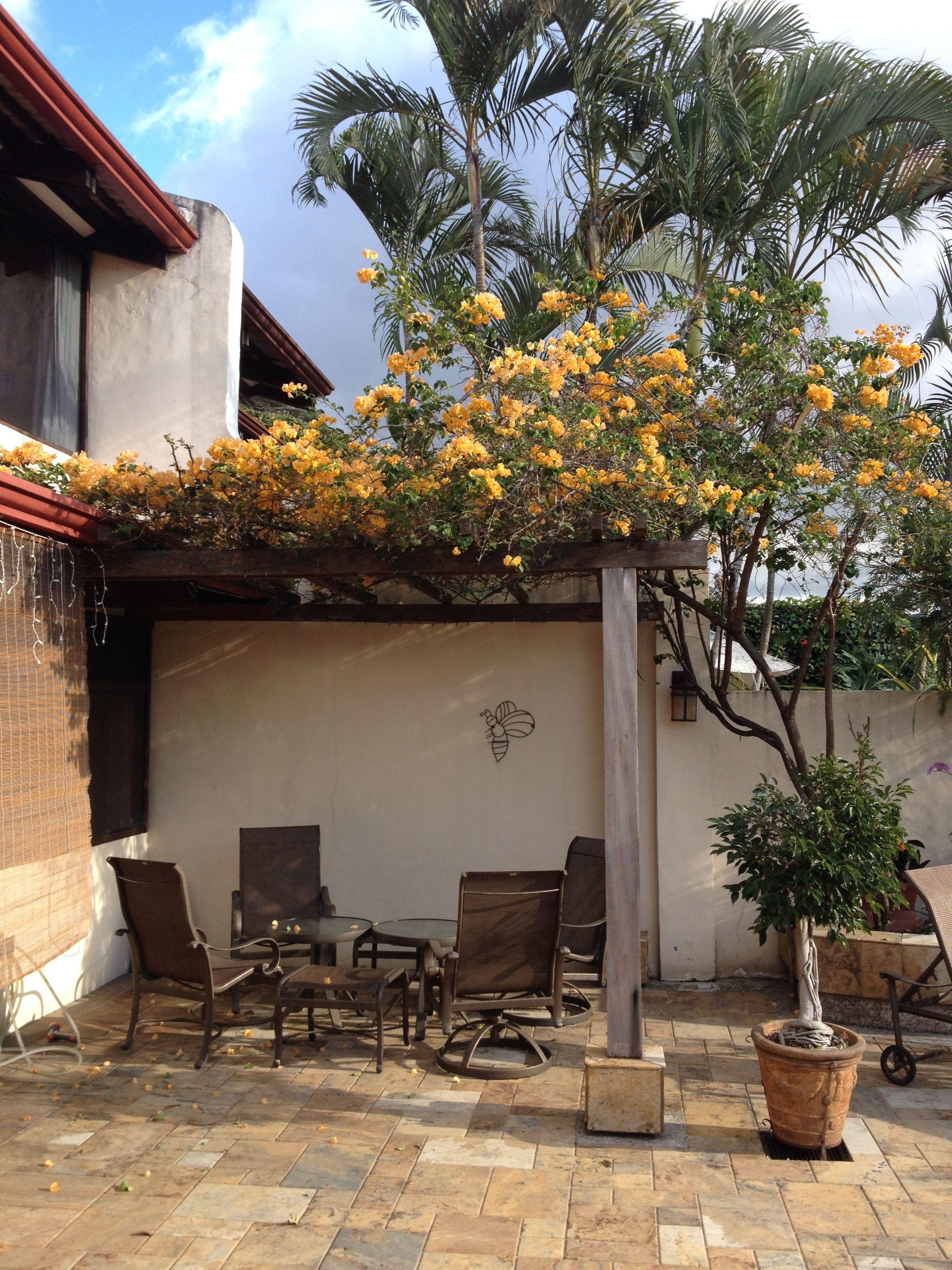 Houte pergola bedekt met oranje bougainvillea deze wordt gebruikt