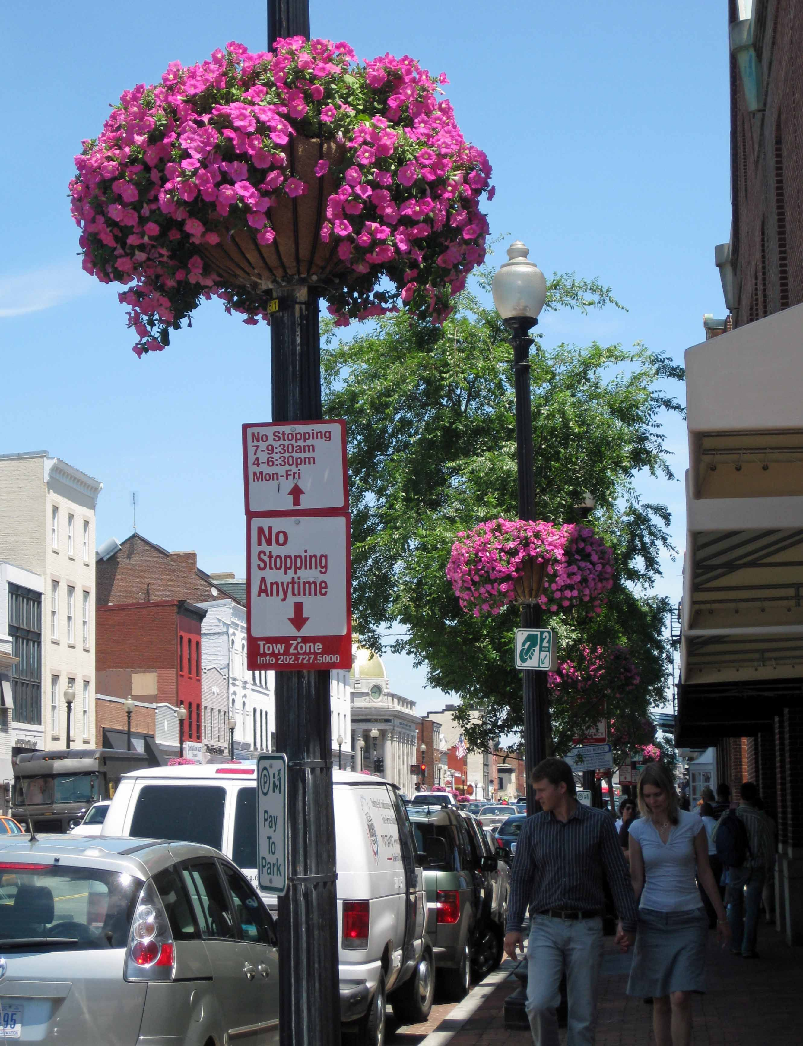 Look Fuchsia Flowers On Georgetown Street Lamps