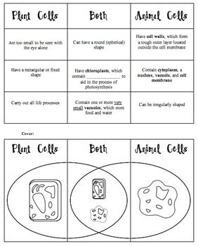 Plant vs animal cell foldable biology pinterest plants animal plant vs animal cell foldable teacherspayteachers ccuart Images