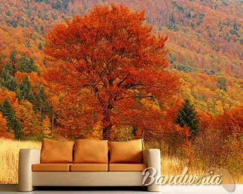 Vinilos Decorativos Para Pared Fotomurales Murales Cuadros Autumn Scenery Field Wallpaper Autumn Trees
