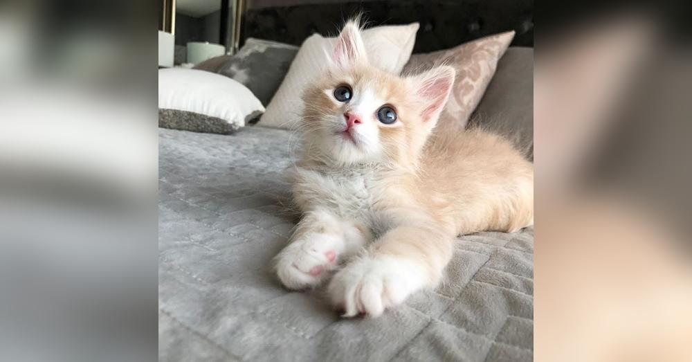This Orphaned Kitten Wasn T Going To Survive Luckily A Hero Intervened Kittens Kitten Season Animal Rescue Stories