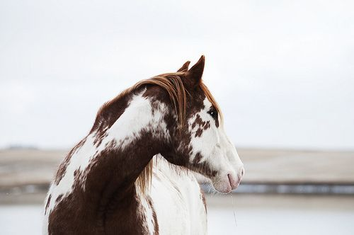 paint horses with blue eyes - Google Search