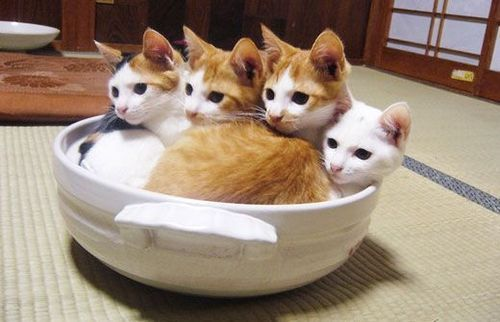 cute-overload:  If we all fits, we all...