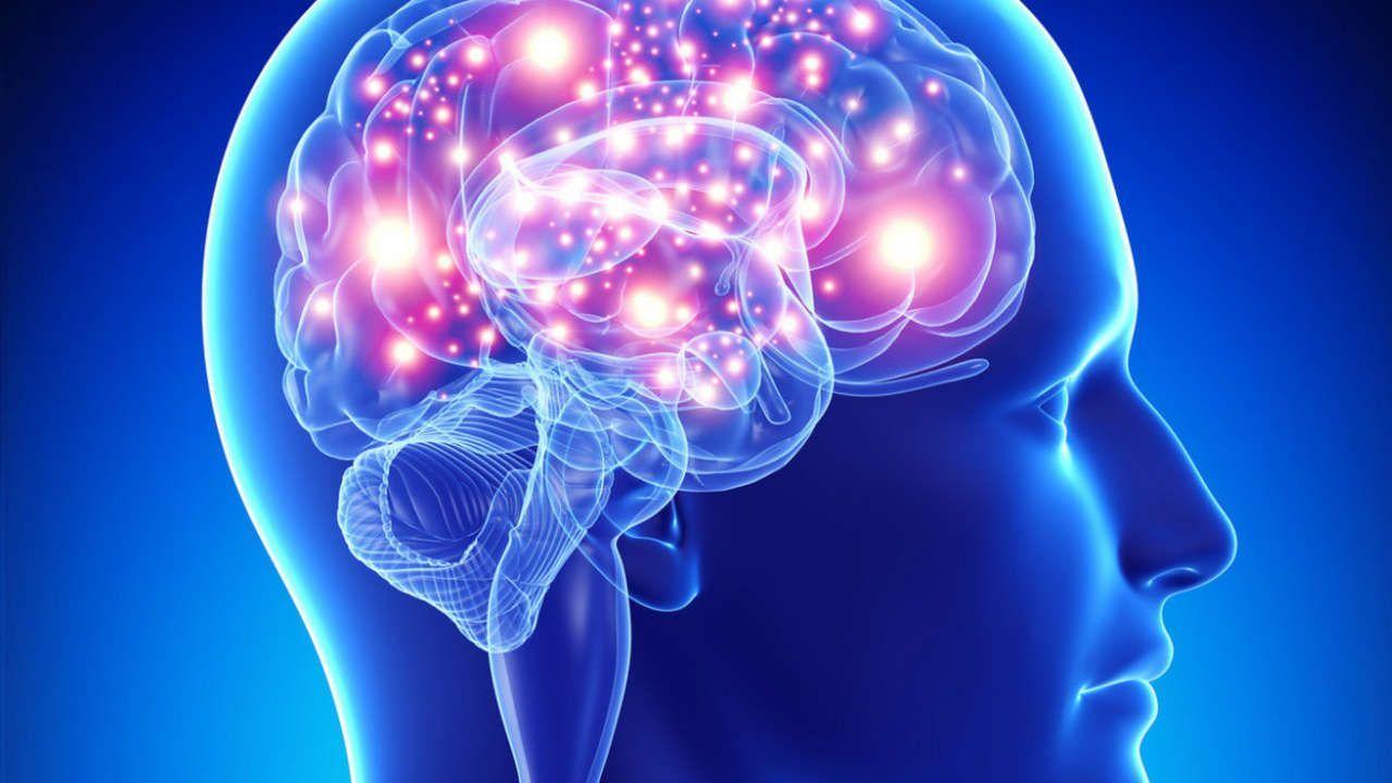t���[�f�� | 脳, フリー素材