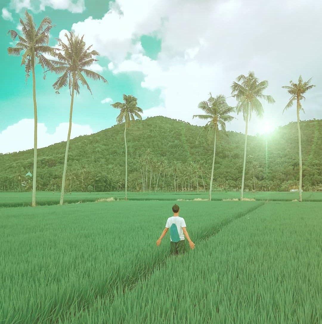 Seperti Inilah Pemandangan Sebagian Besar Sawah Di Lombok Barat Saat Ini Musim Tanam Padi Semoga Tumbuh Subur Hingga Panen Dan P Pemandangan Petani Tanaman