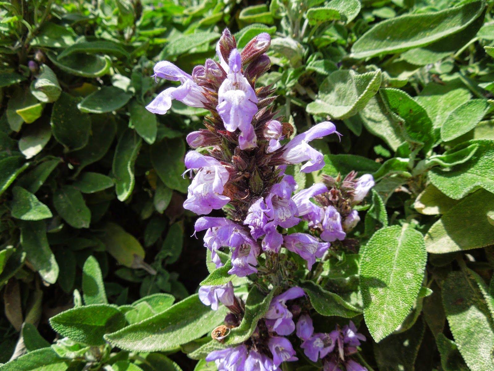 plantas ornamentales con sus nombres lamina Buscar con Google