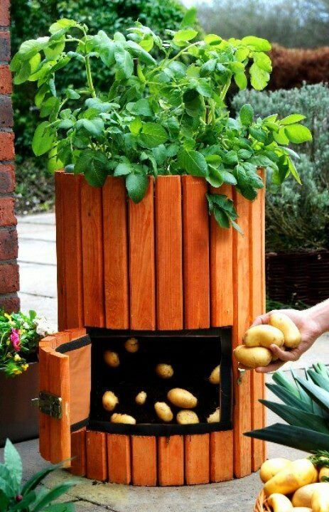 The Gorgeous And High Quality Wooden Potato Planter Primrose Recommends Repeat Harvesting Possible Enjoy Fresh Potatoes Every Day Easy Access Swing Door