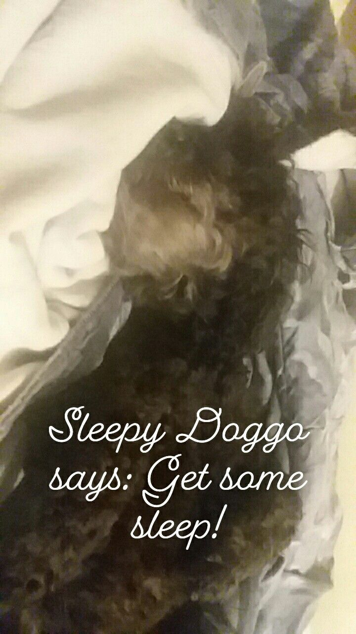 It's getting late....Sleepy Doggo wants you to go to bed