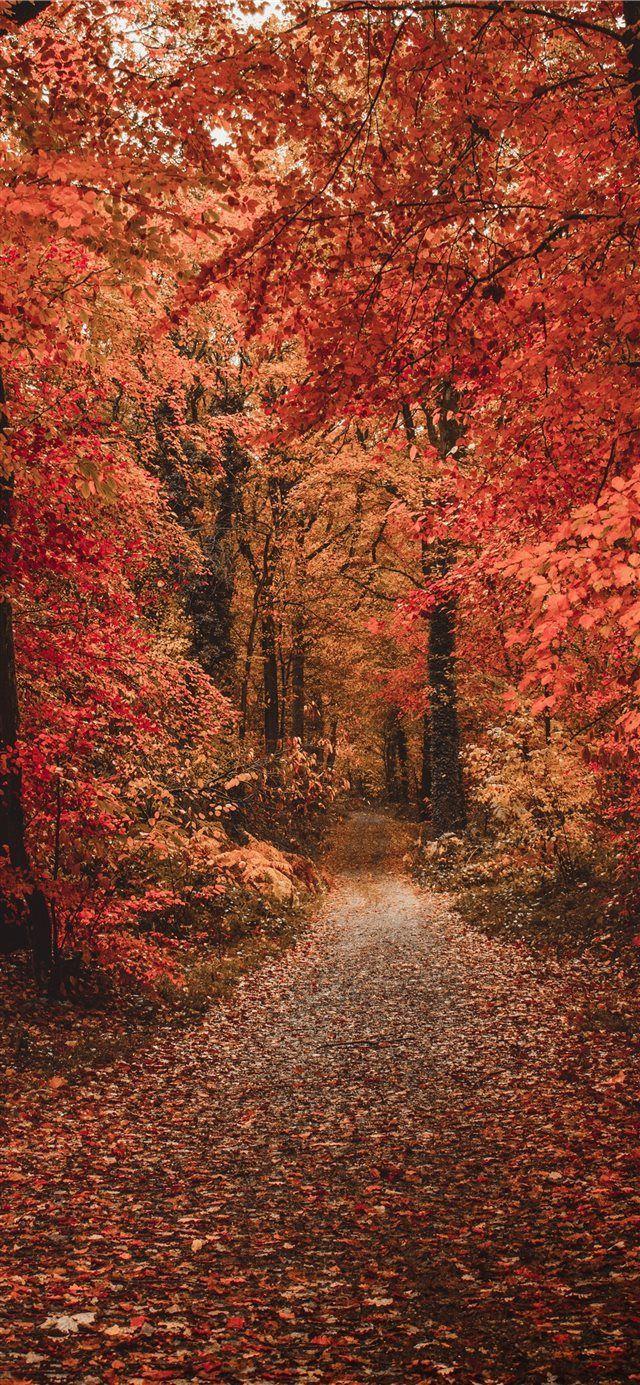 Iphone Xr Wallpaper Autumn Ipcwallpapers Fall Pictures Nature Fall Wallpaper Iphone Wallpaper Fall