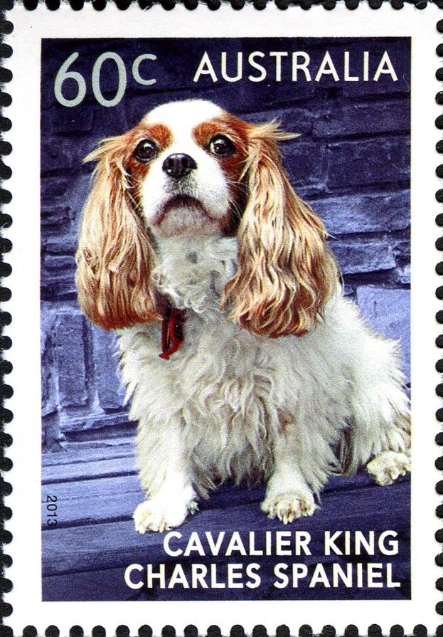 Stamp Cavalier King Charles Spaniel Australia Top Dogs Mi Au 3901 Yt Au King Charles King Charles Dog Cavalier King Charles Spaniel