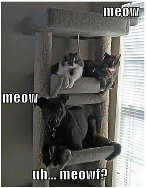 35 Memes Cats Vs Dogs Who Is The Boss Dog Memes Funny Dog Memes Cat Vs Dog