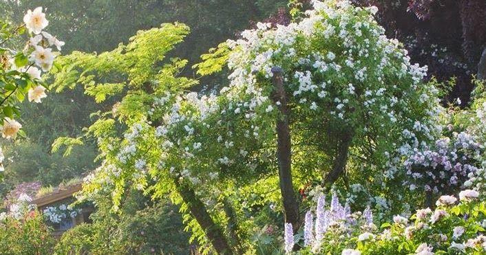 Certes Il En Faut Pour Tous Les Gouts Mais Pour Ce Qui Me Concerne Les Jardins Au Gazon Tondu Bien Ras Troues Jardin Anglais Etiquette Jardin Beaux Jardins