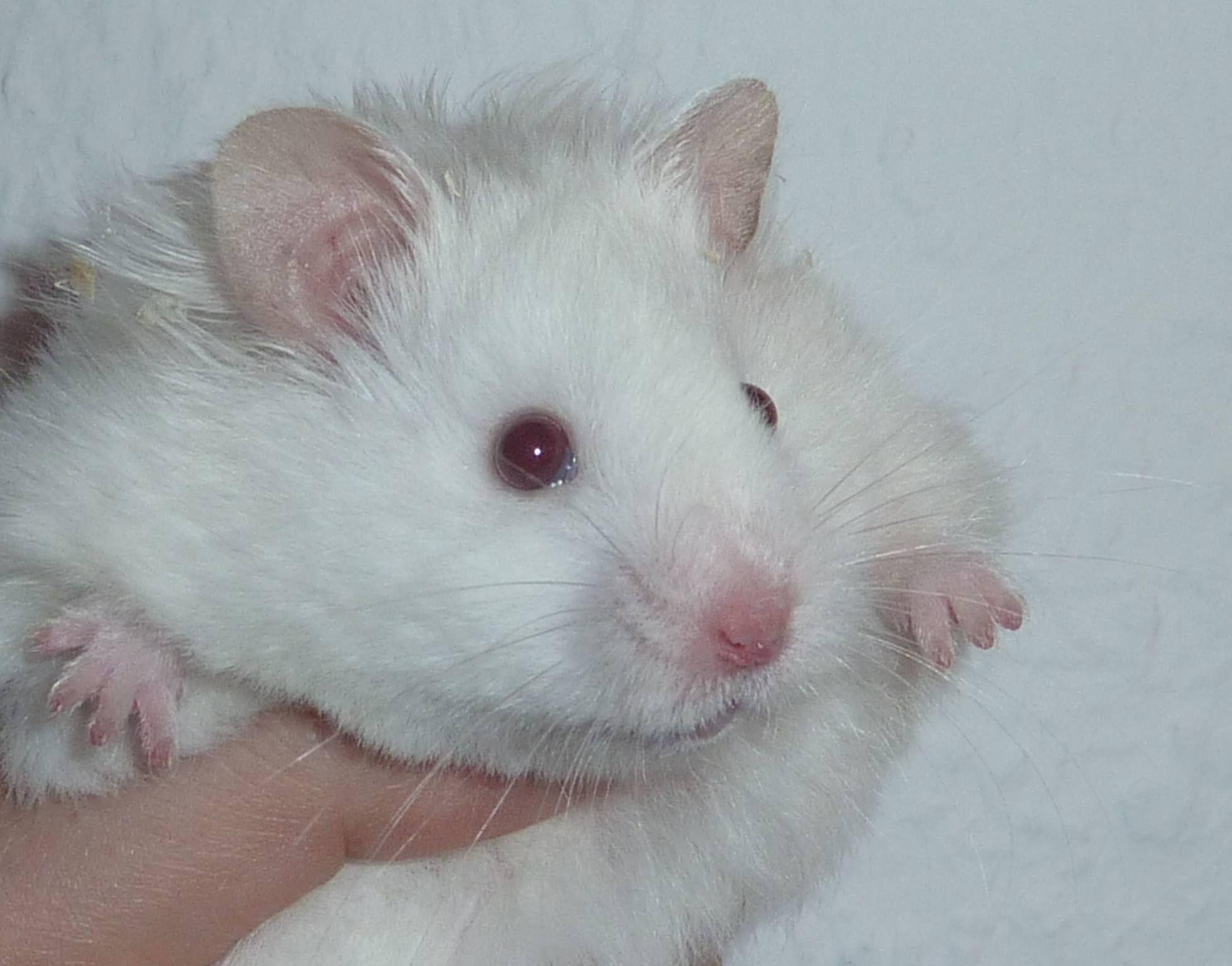 Flesh Eared White Lh Cute Baby Animals Baby Animals Cute Animals