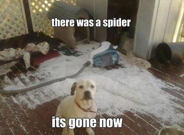 There Was A Spider It S Gone Now Let A1 Exterminators Get Rid Of