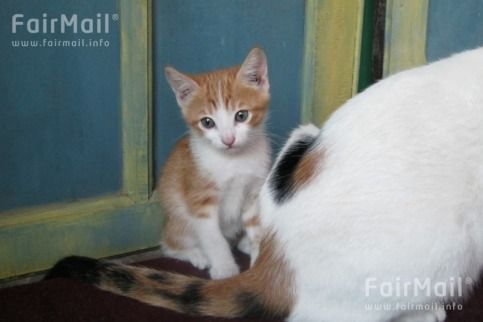 Kitties Photographed by Fatimazahra Ouchahde - Morocco - FairMail - Fair Trade Photos - MFAP-0013