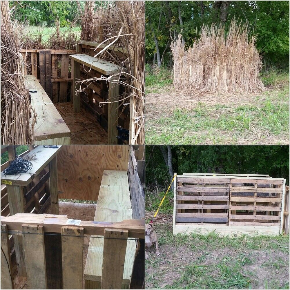 Diy pallet blind and buffalo grass hunting pinterest pallets diy pallet blind and buffalo grass solutioingenieria Images
