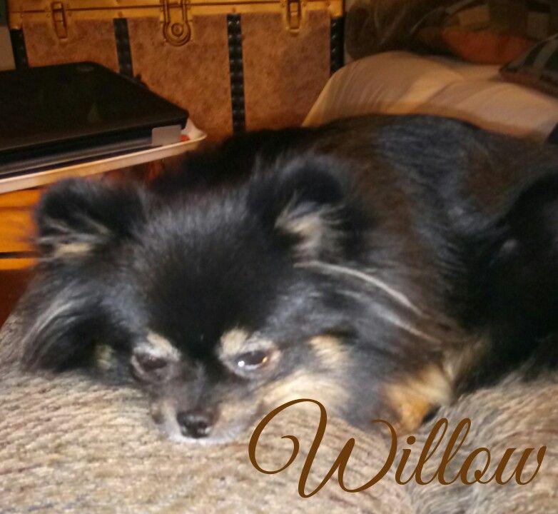 My sweet little Willow enjoying a nap.