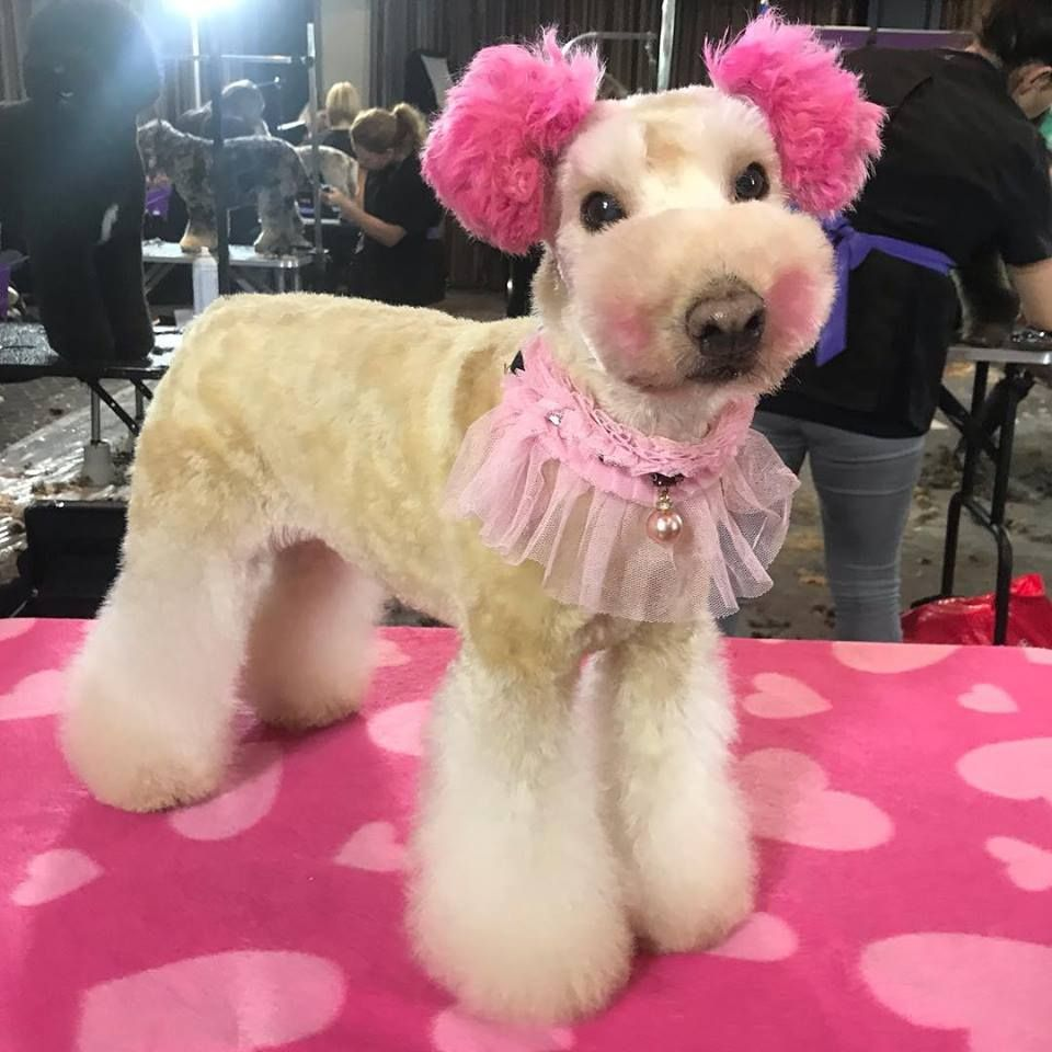 If You Want To Groom A Dog For The First Time Or Want A Temporary
