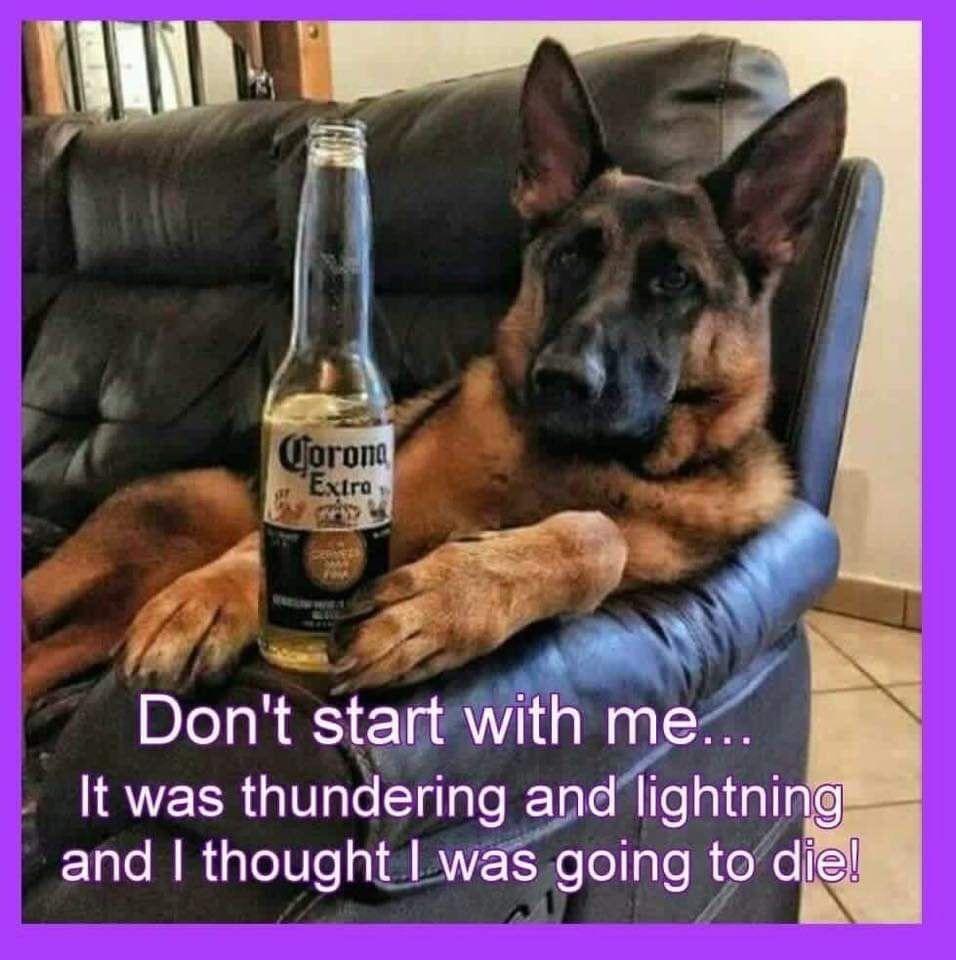 Pin By Leanne Burton On Pet German Shepherd Funny German Shepherd Memes German Shepherd Quotes