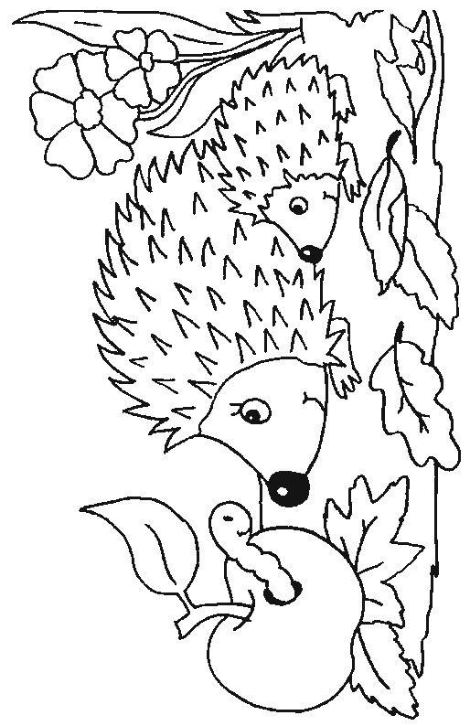 Coloring Page Hedgehogs Hedgehogs Lustige Malvorlagen Igel Ausmalbild Malvorlagen Tiere