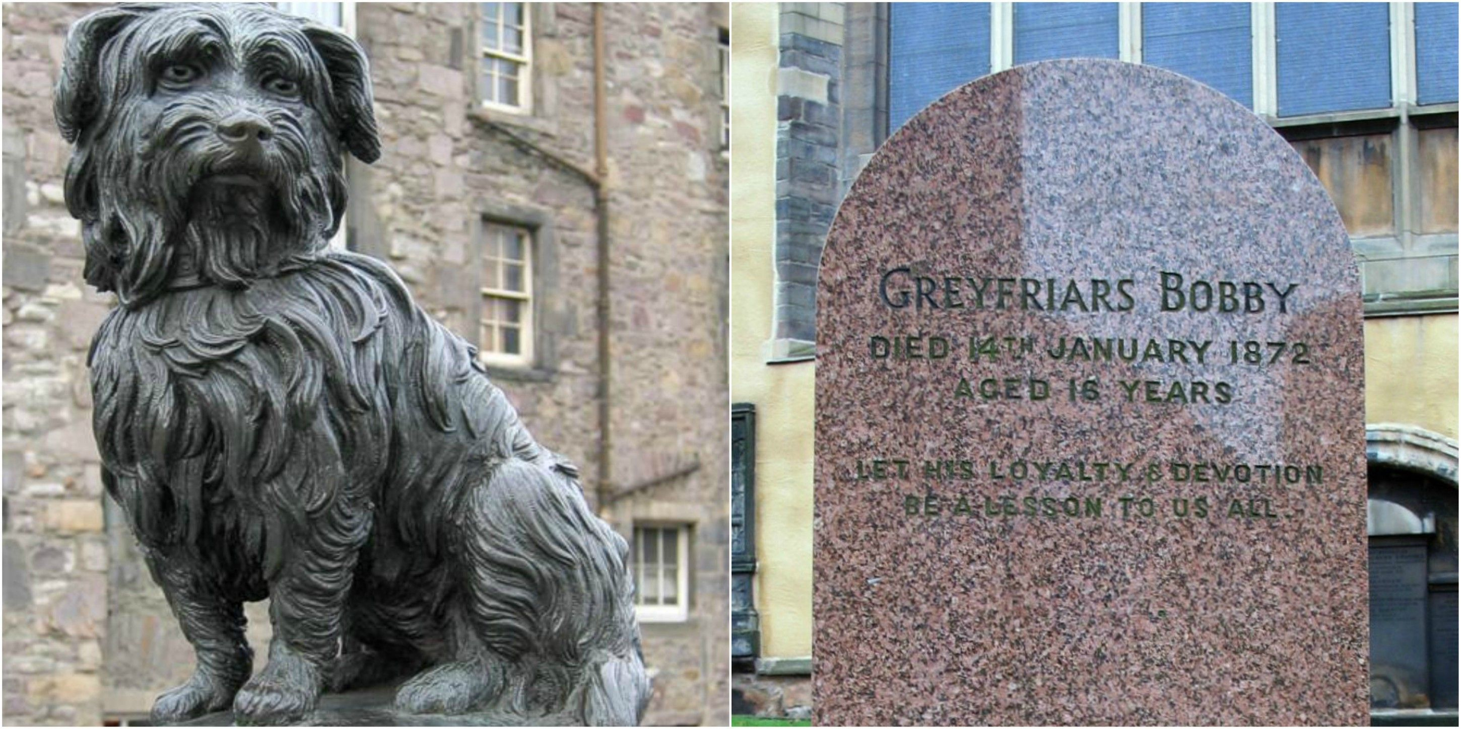 Greyfriars Bobby The Dog That Spent 14 Years Guarding The Grave