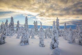 Tammikuu, January 2015 - mjunttil.kuvat.fi