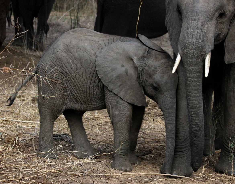 Zimbabwe | Baby animals super cute, Baby animals pictures ...