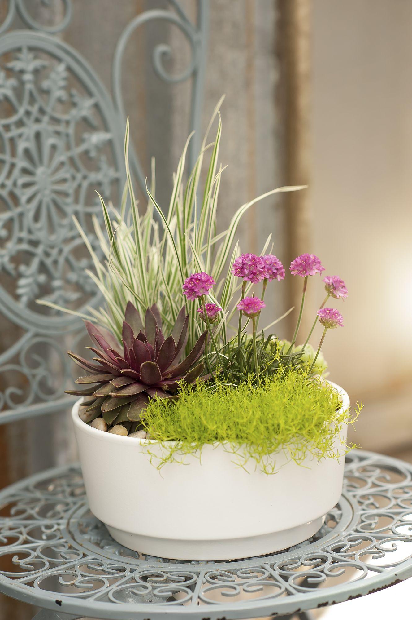 Handplanted decadence! (With images) Plants indoor