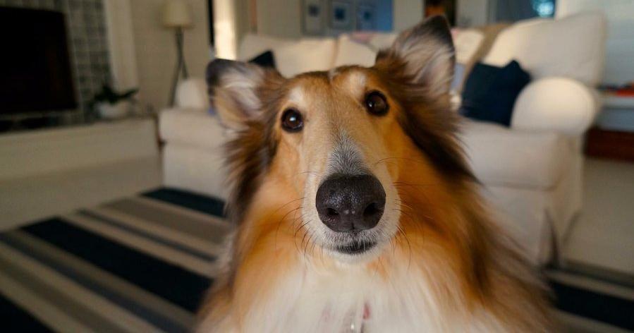 Comportamientos Indeseados Que Los Duenos De Los Perros Refuerzan Dia Mundial Del Perro Perros Cosas Interesantes Sobre Perros