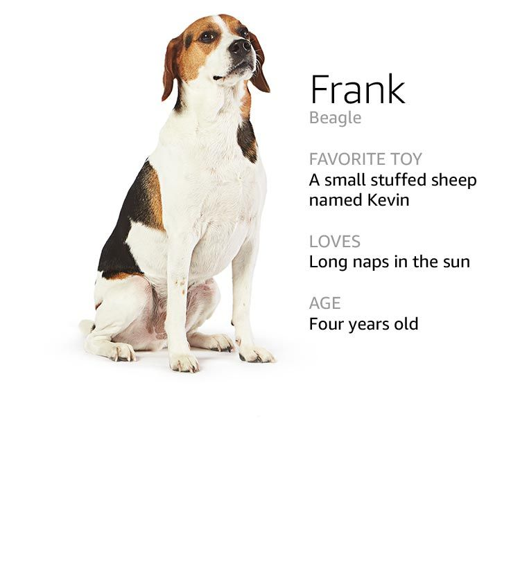 Meet The Dogs Of Amazon Dogs Dog Names Cute Animals