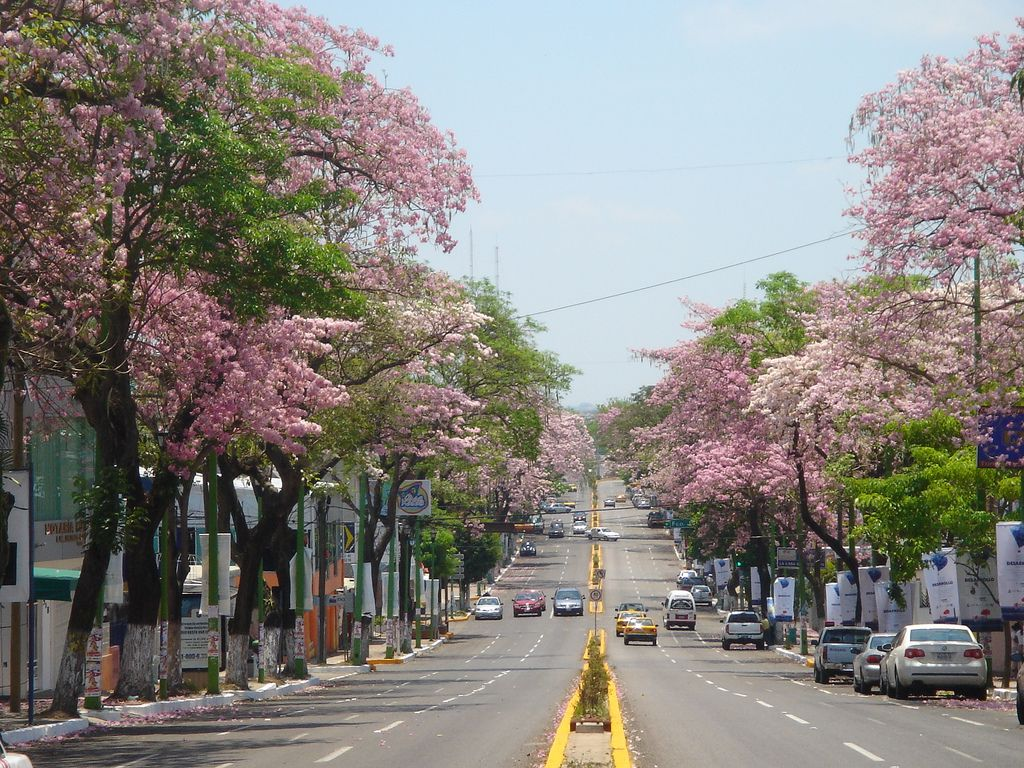 Villahermosa no teme a coronavirus y no cesará actividades públicas