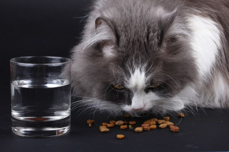 How Often Should You Feed Your Cat Details Here Cat Food Senior Cat Food Cat Nutrition