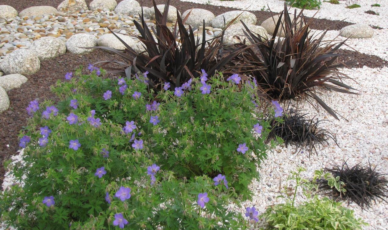 Choisir Les Plantes Et Le Gravier D Un Jardin Sur Gravier Comment Faire Un Jardin Blog Jardin Jardins